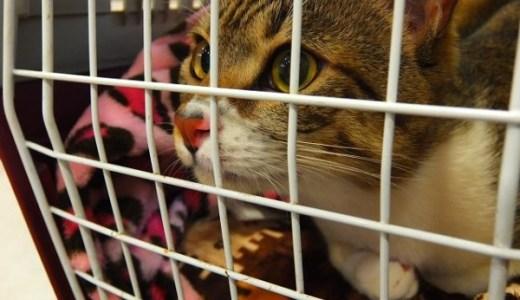 猫との避難に最適なケージにもなるリュック型キャリーはこれ!