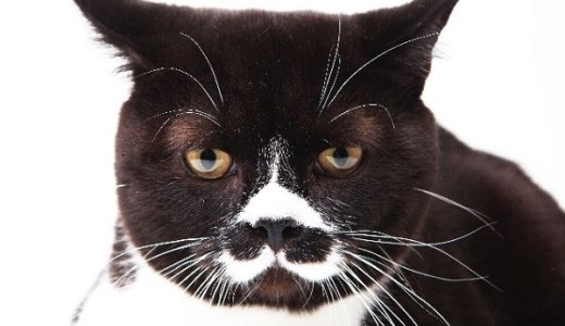 猫のほくろはガンの可能性も?鼻や耳、口周辺など見分け方は?