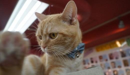 猫のテーマパークin関東,東海!施設情報やオススメなど紹介!