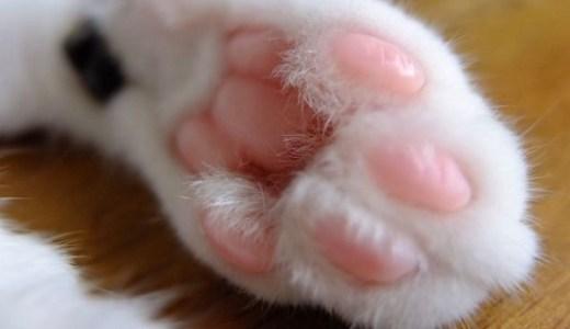 猫の肉球の切り傷や皮剥け、やけどや腫れなどの治療法は?