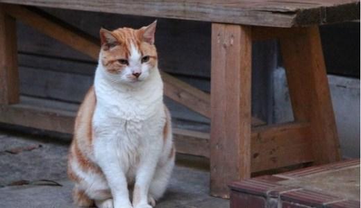 猫のテーマパークin関西,中国,九州!施設情報やオススメなど!