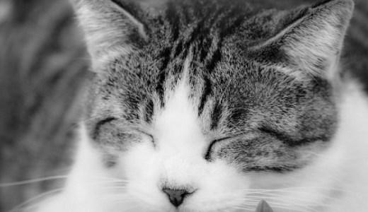 猫の癌治療!免疫療法の効果や費用は?副作用なくQOL向上を期待!