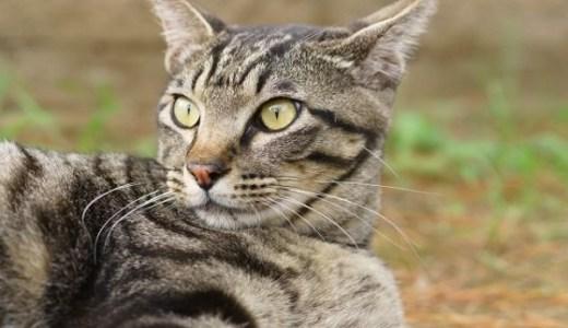 猫の寄生虫(トキソプラズマ)が人間の脳を支配し性格を変える!?