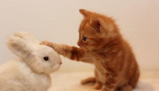 猫の天敵(外敵)は?それは自然界の野生動物なのか人間なのか?