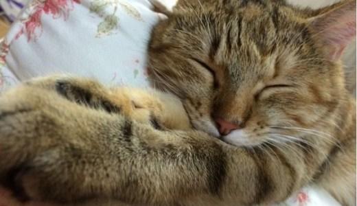 猫の口内炎にイーフェイスvの効果は?成分や作用とは?