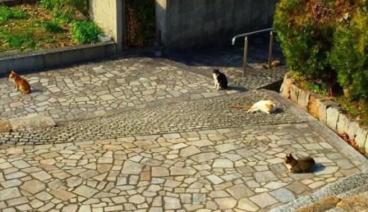 猫が集会を開く目的とは?謎が多いノラネコの生態に迫る!
