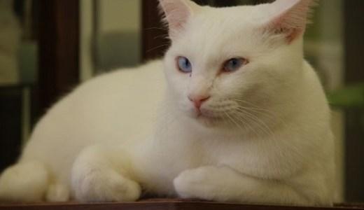 猫の全身麻酔における後遺症や副作用、死亡率などについて!