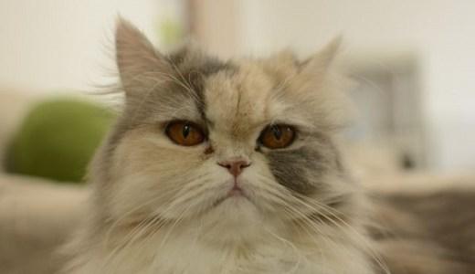 猫の超音波検査の費用は?エコーで分かる異常や病気など!