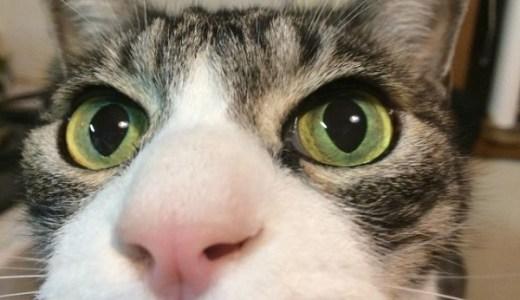 猫の留守番はスマホで見守りカメラ&自動給餌器の合体が便利!