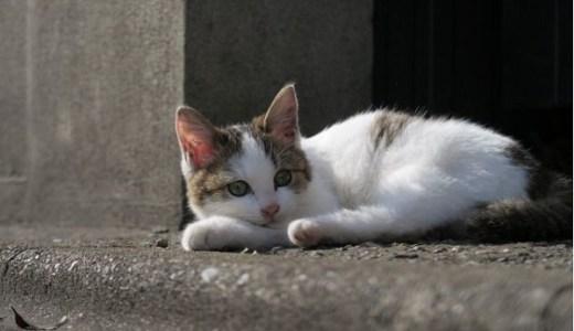 猫の予防接種が毎年必要とされる訳は?動物病院の事情とは?