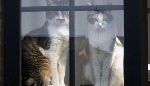 猫のペットホテルは不安?過ごし方や注意点,ワクチン接種など!