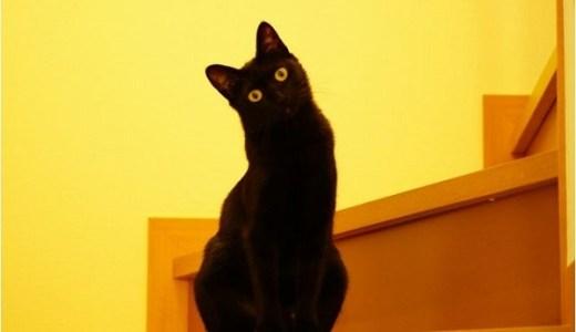 猫の地震予知!前兆をどう察知している?3つの可能性とは?