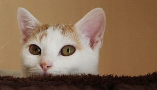 猫にビオフェルミンの効果は?量や与え方、副作用について!