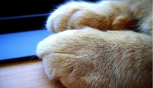 猫のふみふみは寂しいから?愛情たっぷりの爪刺し刑が痛い件!