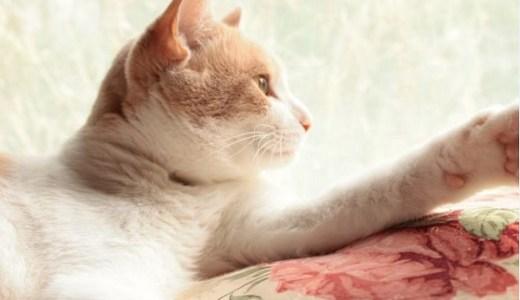 猫の慢性腎不全に漢方薬の役割や効果は?進行を抑制できる?