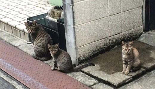 ノネコと野良猫の違いは?動物愛護法と鳥獣保護法どちらの扱い?