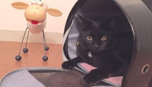 猫を一緒に旅行に連れていくには?準備するものや注意点など!