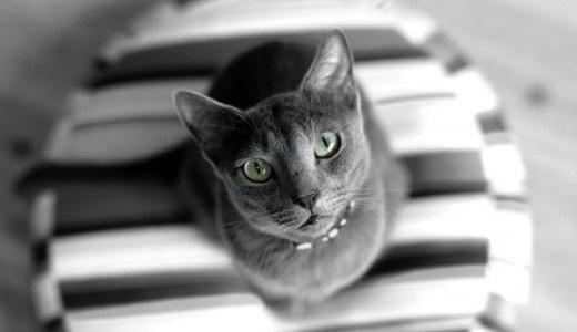 猫の肥満細胞腫!良性の場合の症状、治療や予後について!