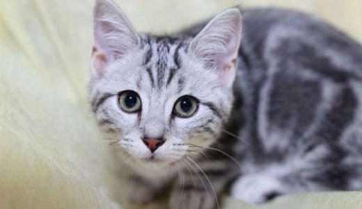 猫のストレスによる胃腸炎(胃液を吐く,下痢など)の対処法!