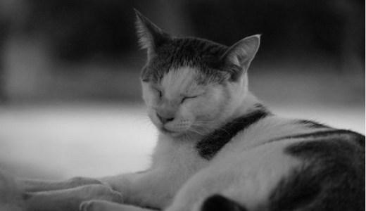 猫の低体温症の原因や症状と治療法は?自宅でできる対処法は?