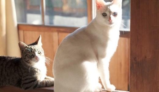 箱根の温泉旅館みたけの看板猫やお宿のほっこり情報まとめ!