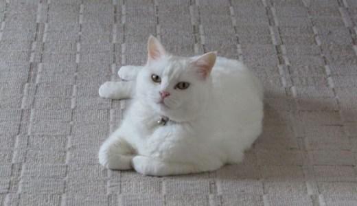 鹿児島の民宿ニャンバーワンの看板猫たちや料金、プランなど!