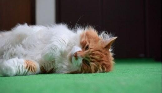 猫の心筋症に効果的なサプリとは?有効な成分や作用について!
