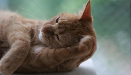 猫の関節炎の治療!痛み止め薬(ステロイド他)やレーザーの効果など!