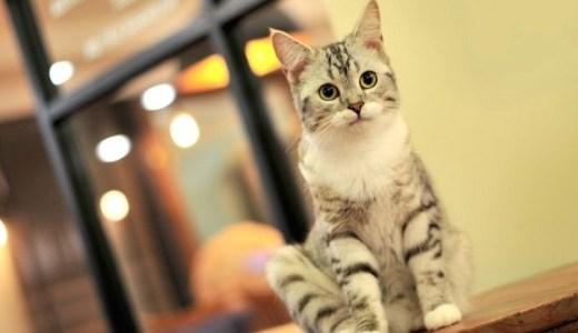 猫の関節炎の対策や予防に!おすすめサプリと成分や効果など!