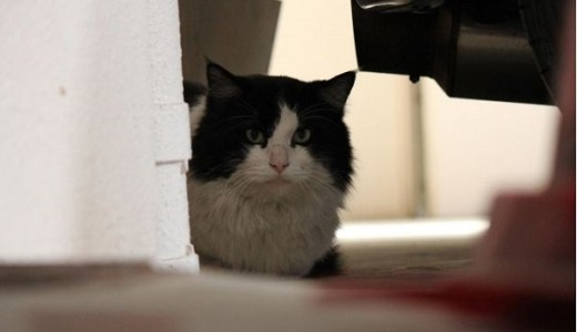 猫と地震!パニック、怖がる猫を落ち着かせる対処法など!