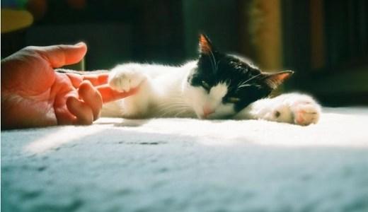 猫の腎不全と口臭や体臭の関連性!体の状態や対処法など!