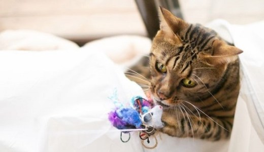 猫がおもちゃに飽きる心理と本能!好むおもちゃの条件とは?