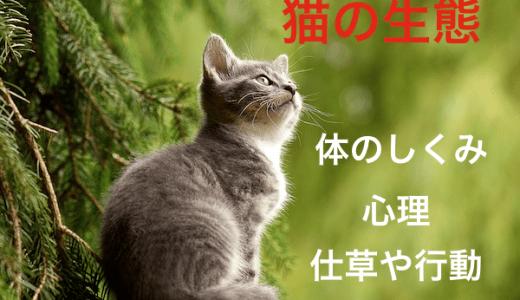 猫の生態!体のしくみと仕草や行動から分かる心理など!