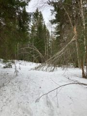 Fallna träd över vägen