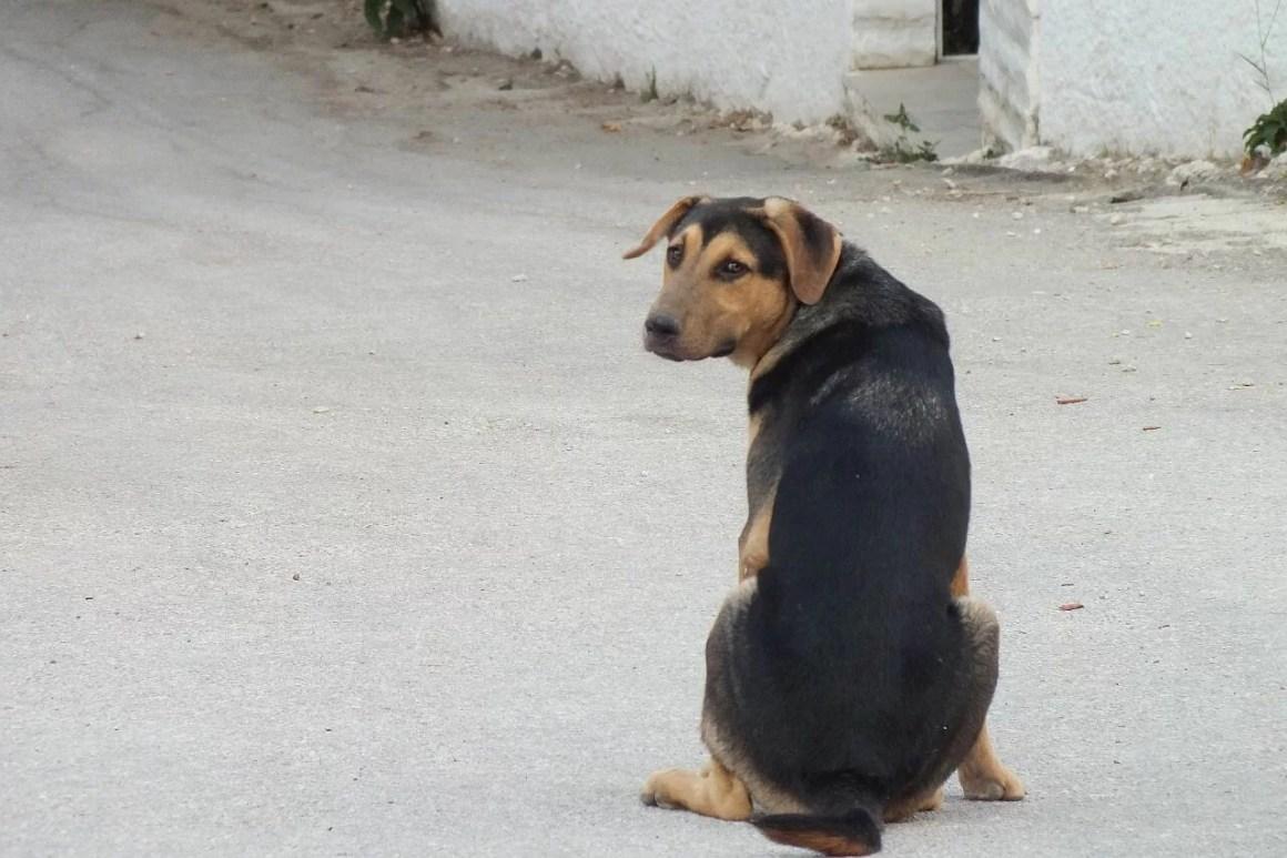 pies siedzi na ulicy i rozmyśla jak biegać