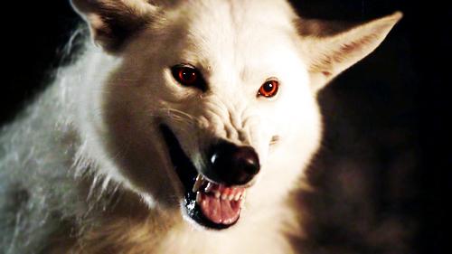 thrones wolf