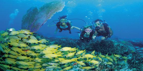 Argos Reef