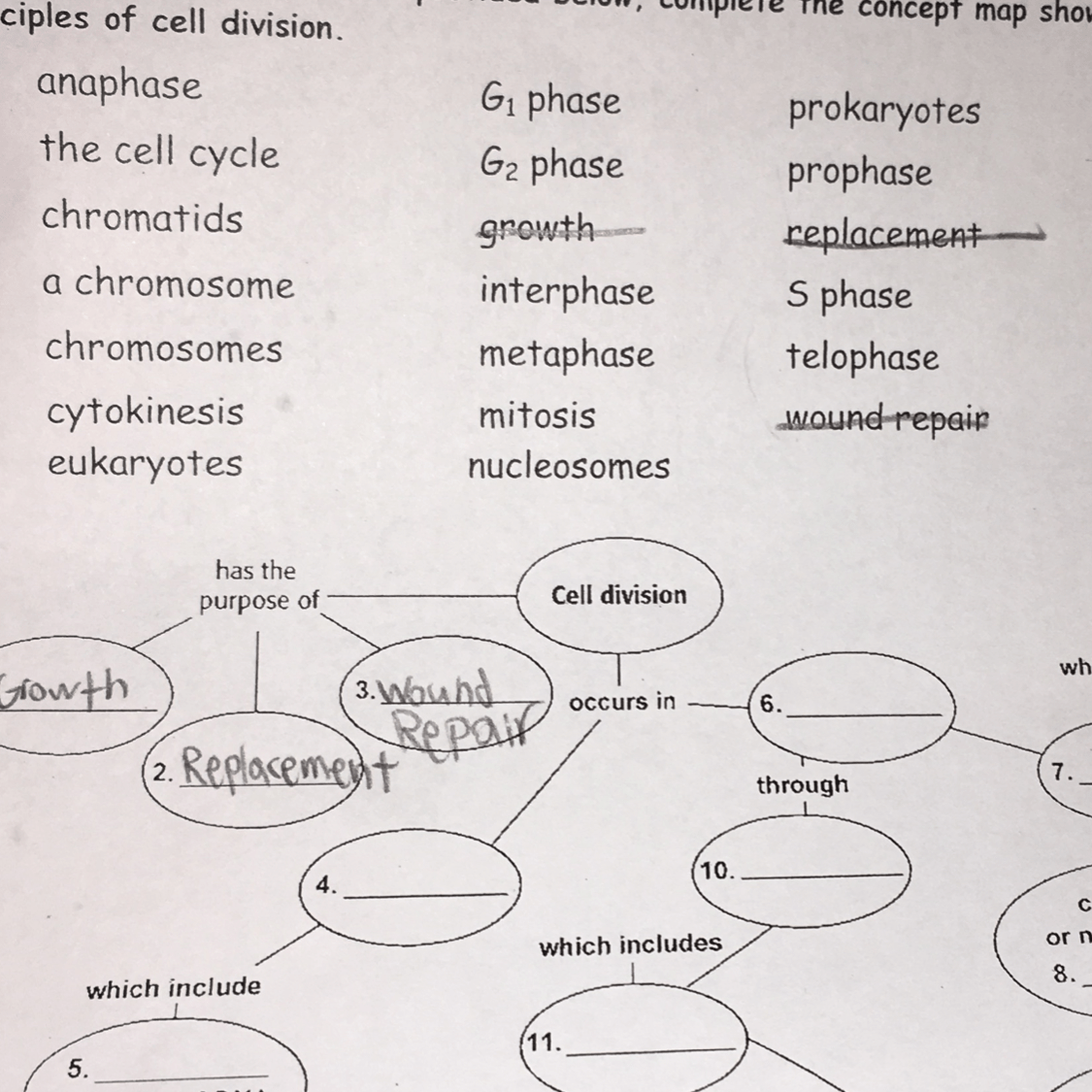 Where Does Cell Division Occur In 4 And 6