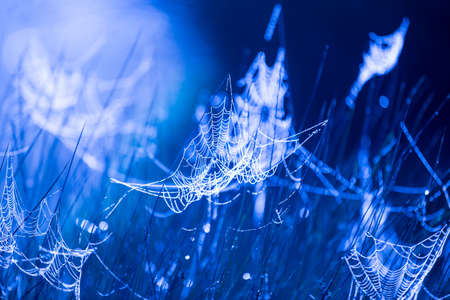 cobweb: Blue dawn cobweb Stock Photo