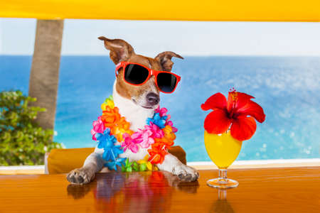 funny cool dog drinking cocktails at the bar in a beach club party with ocean view Stock Photo - 32316016