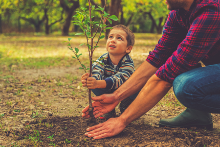 When will it grow? Curious little boy helping his father to plant the tree while working together in the garden Stock Photo - 45234716
