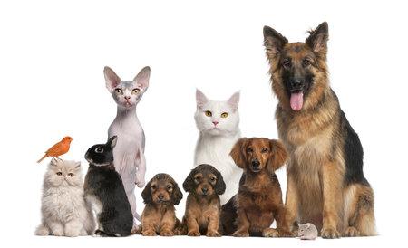 Group of pets: dog, cat, bird, rabbit Stock Photo - 13590258