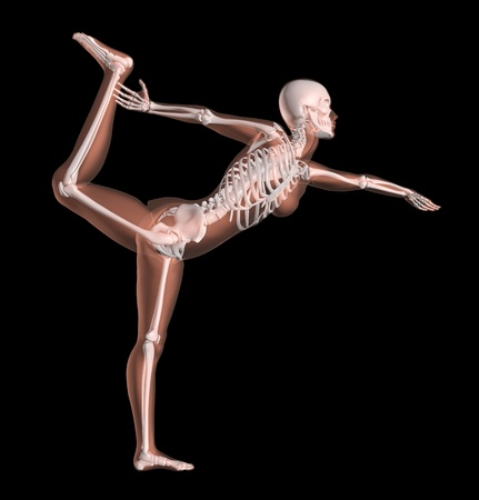 3D render of a female medical skeleton in a yoga position Stock Photo - 10965200
