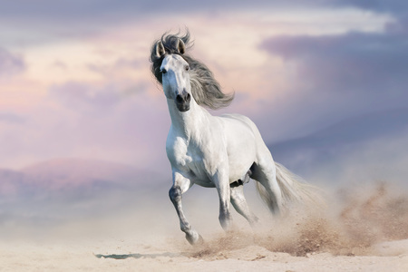 Running Horses Stock Photos And Images 123rf