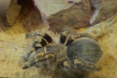 Araña en la arena Foto de archivo - 18574940