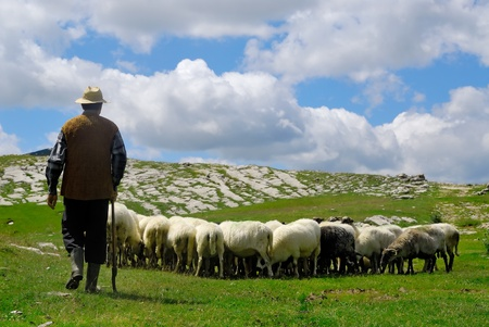 sheep: Shepherd with his sheep on pasture