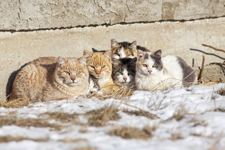 A group of feral cats huddled together to keep warm, near the wall of an old abandoned home . Taken during -28C weather. Stock Photo - 26144060