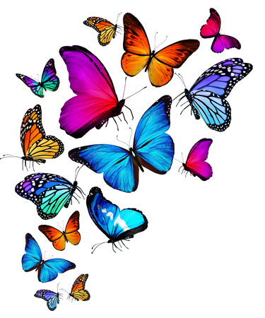 colorful butterfly images amp stock pictures royalty free colorful