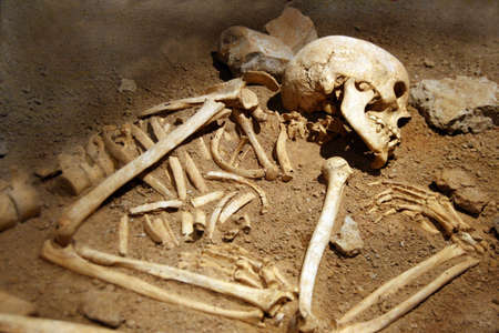 excavation: rests of human bones Stock Photo - 5390882