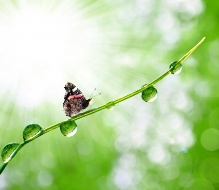 fresh morning dew and butterfly  Stock Photo - 15724495